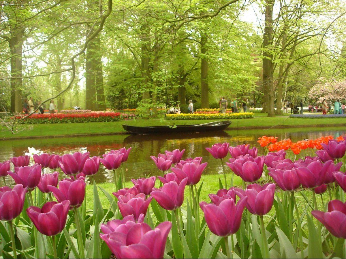 Tulipani a Keukenhof nei paesi bassi