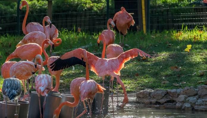 Giardino Zoologico Lisbona Cosa Vedere
