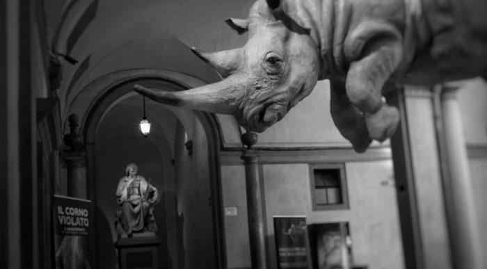 museo-storia-naturale-firenze da visitare