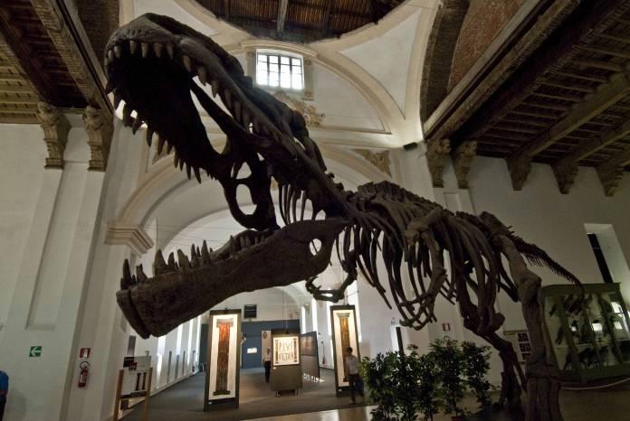 Museo di Scienze Naturali Torino cosa vedere