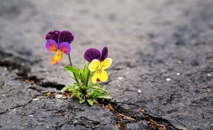 Resilienza significato