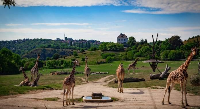 Giardino zoologico zoo Praga cosa vedere
