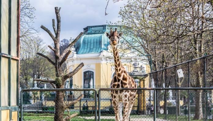 Tiergarten Schönbrunn Zoo di Vienna