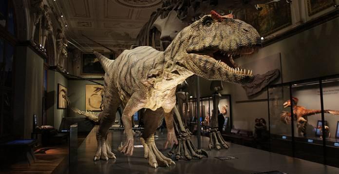 Museo di storia naturale Vienna cosa visitare