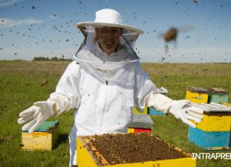 Apicoltura diventare apicoltore