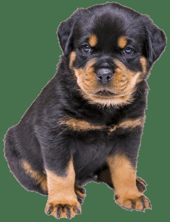 aprire una pensione per cani, aprire asilo per cani