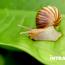Come Avviare un Allevamento di Lumache: Guida Completa all'Elicicoltura