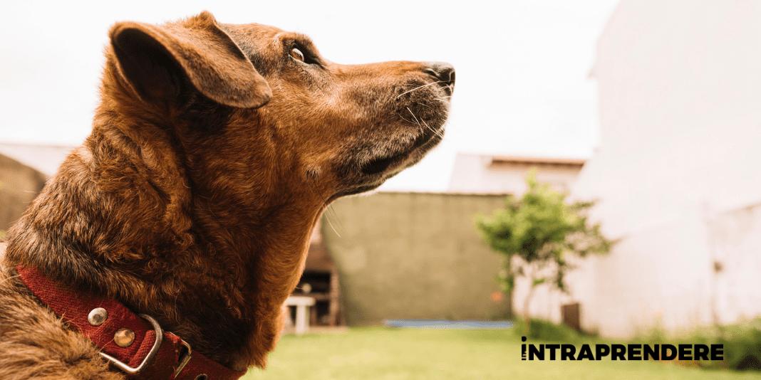 L'Iter Burocratico per una Pensione per Cani: Come Aprirla Rispettando i Giusti Requisiti