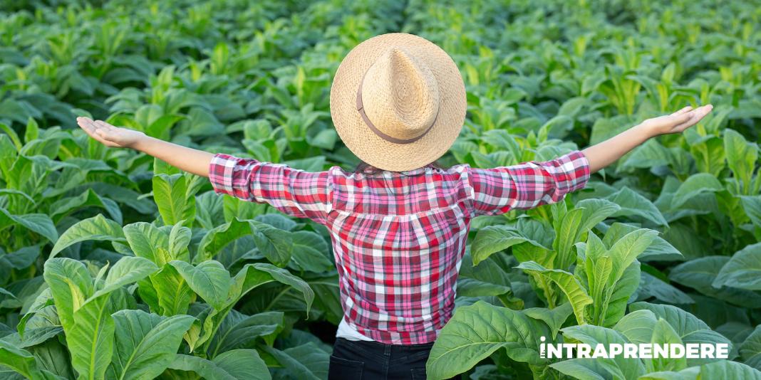 come diventare imprenditore agricolo professionale bitcoin store toronto