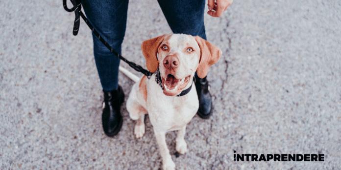 come diventare dog sitter