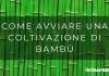 Coltivazioni bambù, come coltivare il bambù
